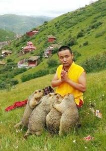 сурки и монах