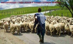 стадо овец, сетевой бизнес